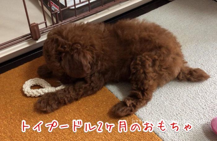 子犬 2ヶ月 おもちゃ