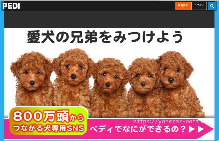 PEDI ぺディ 犬