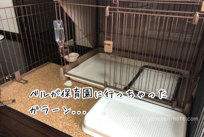 犬 保育園デビュー