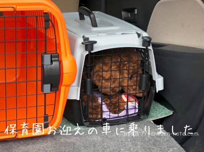 犬 保育園 東京