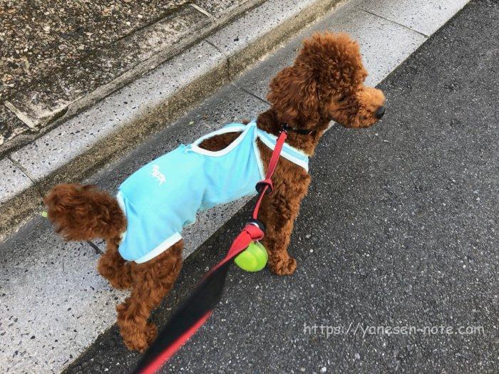 犬 去勢 散歩