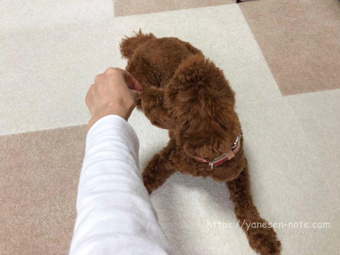 犬 ゴロン トレーニング