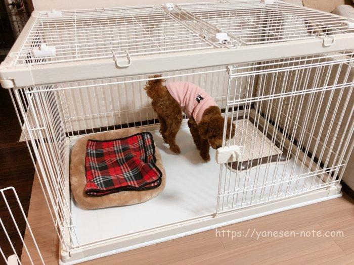 犬 留守番 ケージ 大きさ