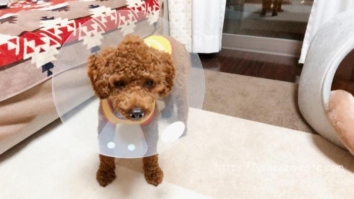 角膜 傷 治療 犬