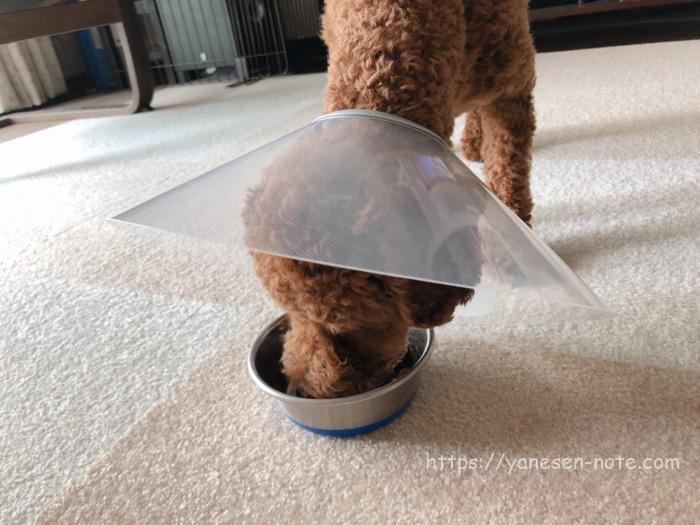 犬 角膜 傷 治療