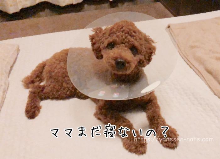 犬 目 傷