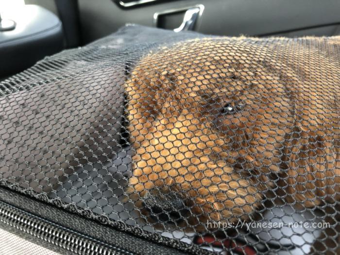 犬 ドライブボックス 車酔い
