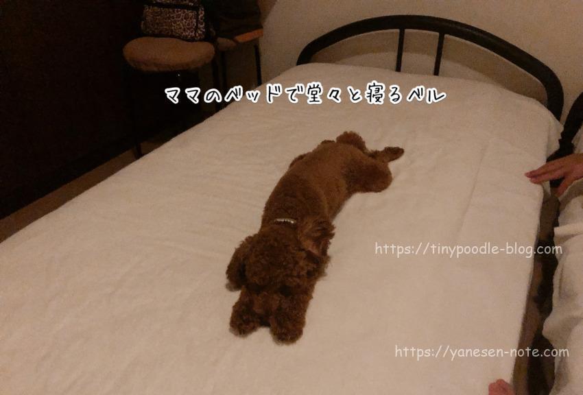 犬 夏バテ 睡眠