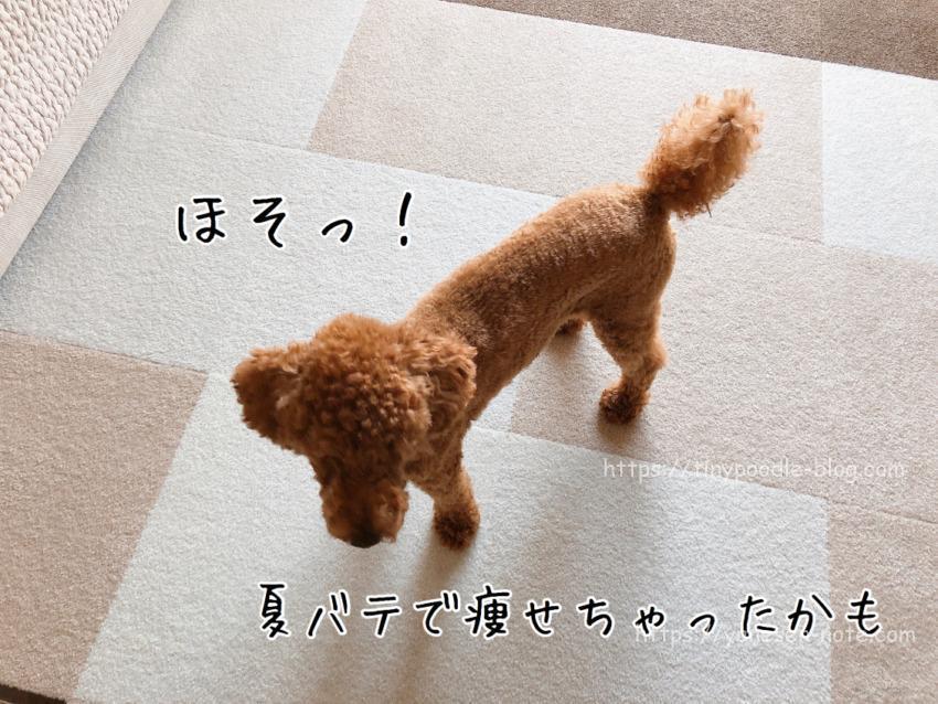 犬 夏バテ 痩せた