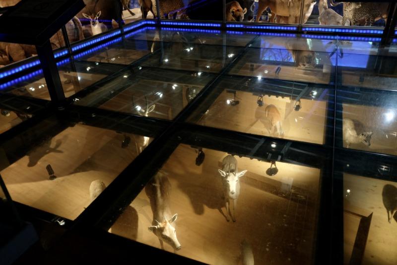 国立科学博物館 地球館 3階