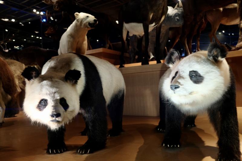 国立科学博物館 地球館 パンダはく製