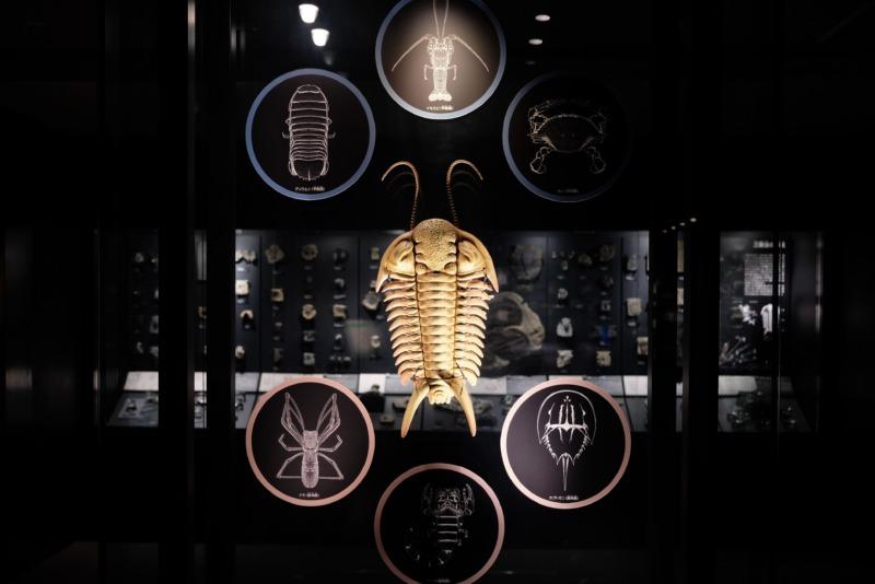 国立科学博物館 地球館 三葉虫
