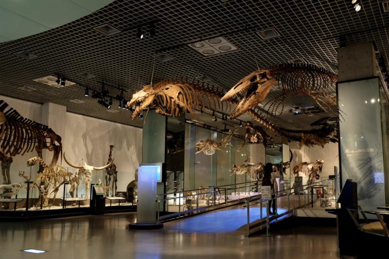 国立科学博物館 地球館 マンモスハウス