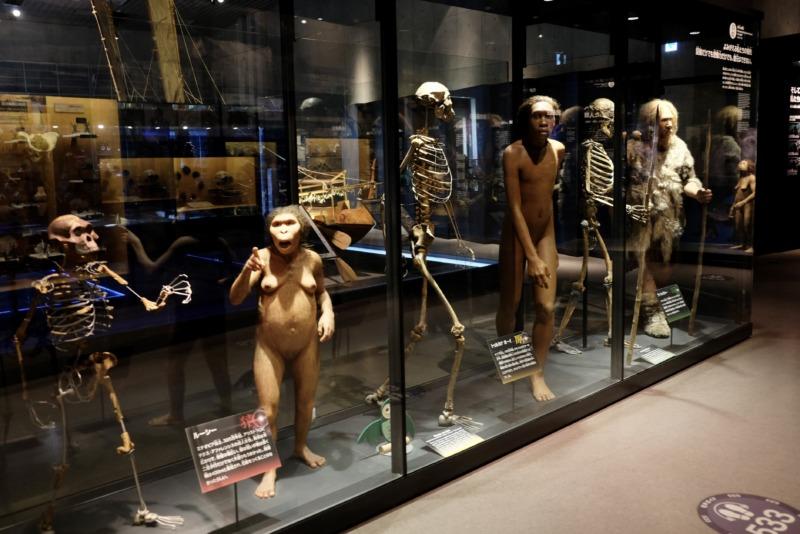 国立科学博物館 地球館 人類の進化