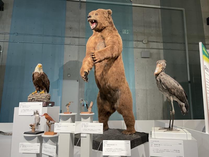 国立科学博物館 大地のハンター展 ヒグマ