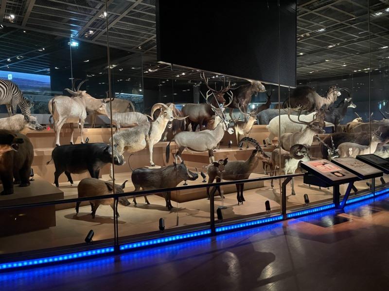 国立科学博物館 地球館 剥製